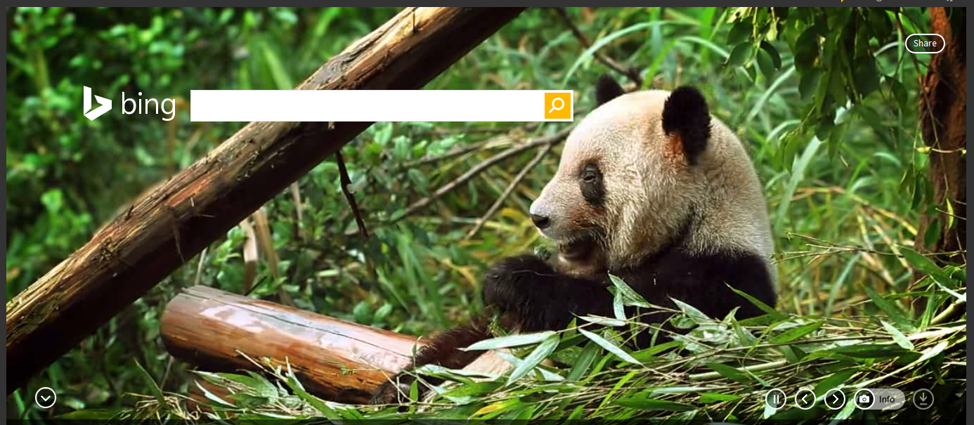 Bing Features… Pandas on the Homepage